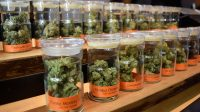The Bloom Room in San Francisco has a wide variety of medical-grade cannabis on display. Eric Chan // Xpress Magazine