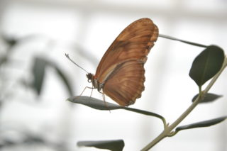 The Butterfly Effect: The Results of Winged Popularity