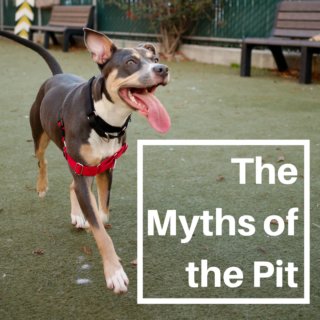 The Myths of the Pit