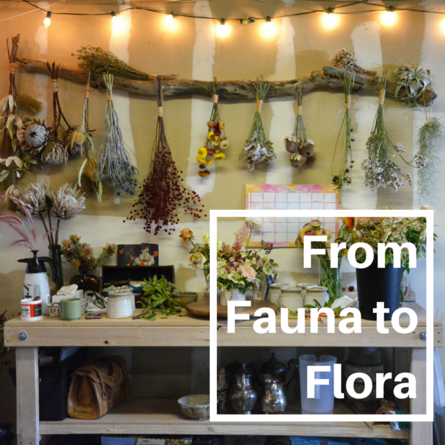 From Fauna to Flora