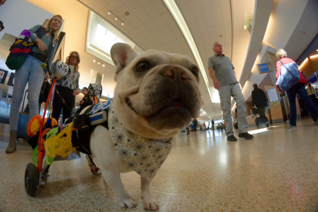 Wag Brigade at San Francisco International Airport on October 22, 2018