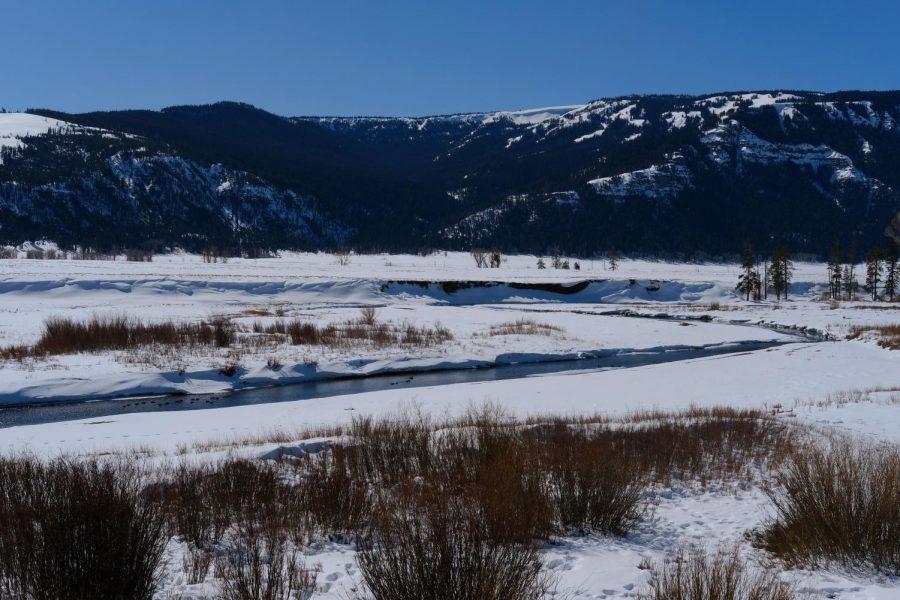 20210313_Yellowstone_Wilcox-0801